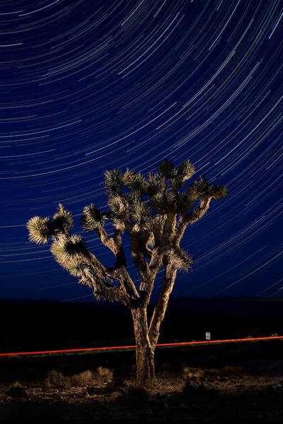 Star Trails Photograph - Joshua Tree And Star Trails by Steve Gadomski