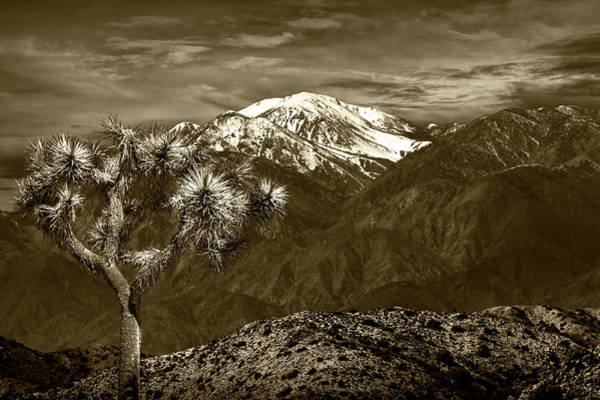 Photograph - Joshua Tree At Keys View In Sepia Tone by Randall Nyhof