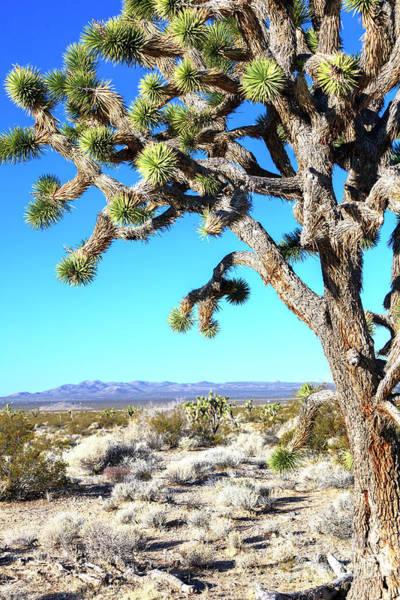 Yucca Palm Photograph - Joshua Tree At Mojave National Preserve by John Rizzuto