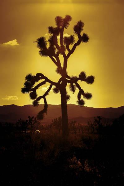 Nps Photograph - Joshua Tree Glow by Stephen Stookey