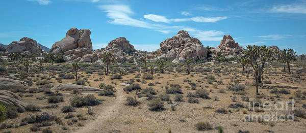 Tree Climbing Photograph - Joshua Tree Hidden Valley Panorama by Michael Ver Sprill
