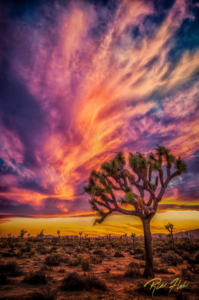 Photograph - Joshua Tree In The Glowing Swirls by Rikk Flohr