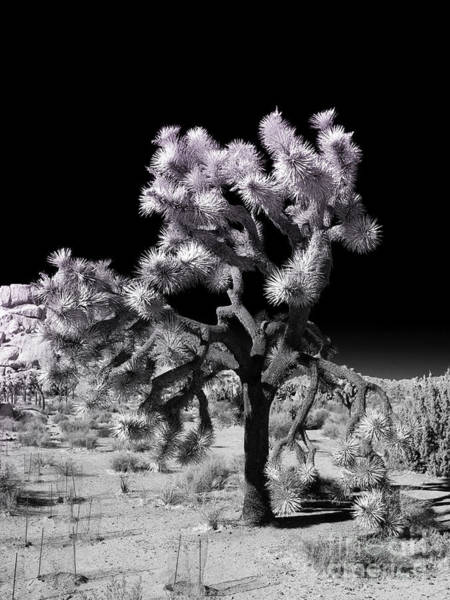 Photograph - Joshua Tree Infrared by Blake Webster