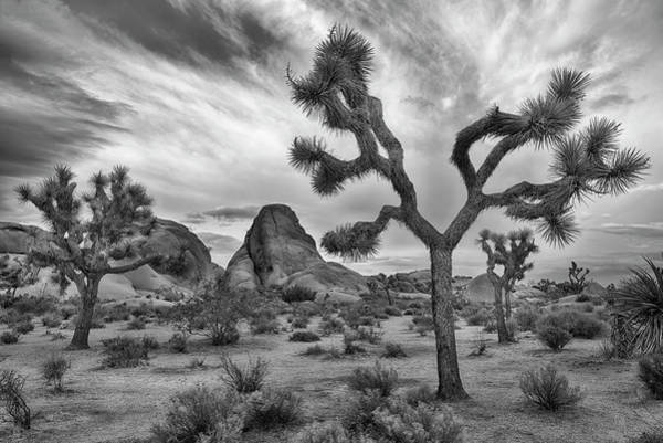 Wall Art - Photograph - Joshua Tree National Park Black And White Landscape by Dave Dilli