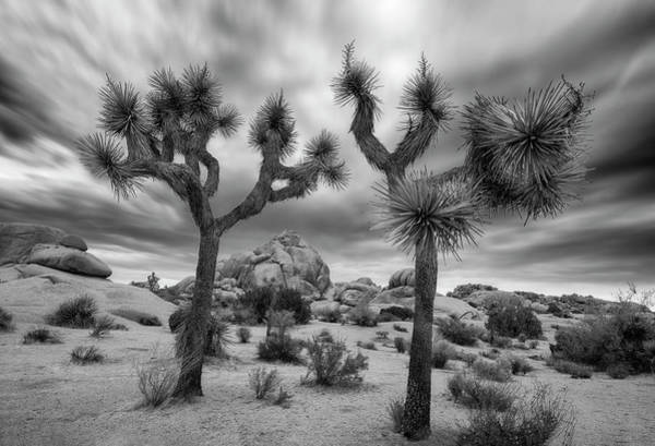 Wall Art - Photograph - Joshua Tree National Park Black And White Sunrise by Dave Dilli