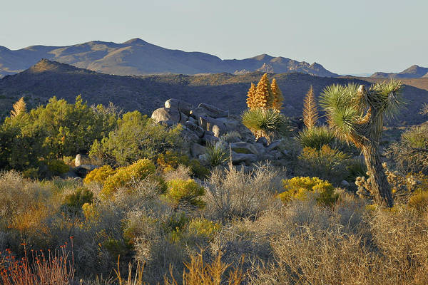 Photograph - Joshua Tree National Park In California by Christine Till