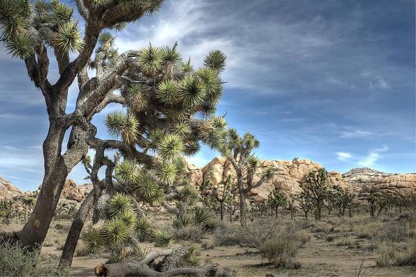 Wall Art - Photograph - Joshua Tree National Park by Jane Linders