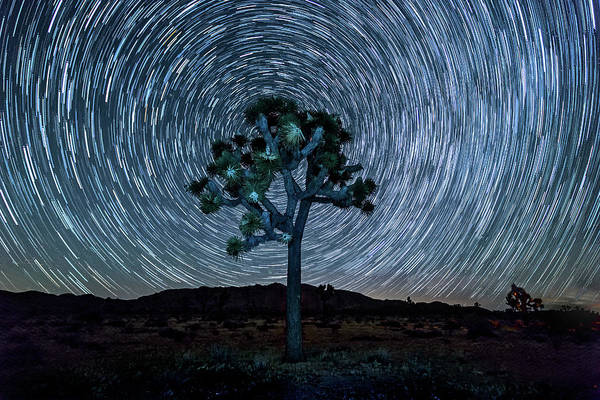 Big Sky Photograph - Joshua Tree Spiral by Peter Tellone