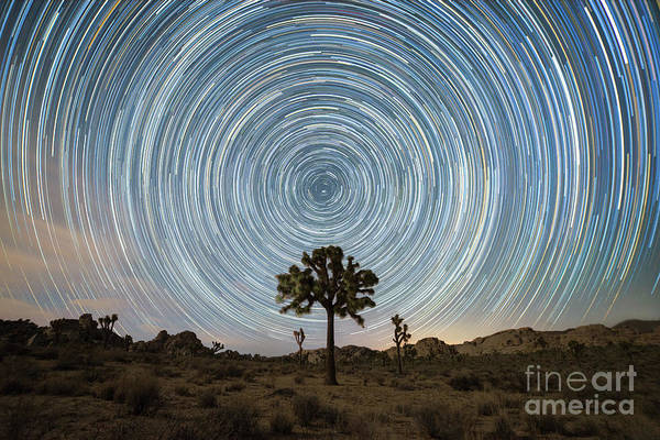 Star Trails Photograph - Joshua Tree Star Trails  by Michael Ver Sprill