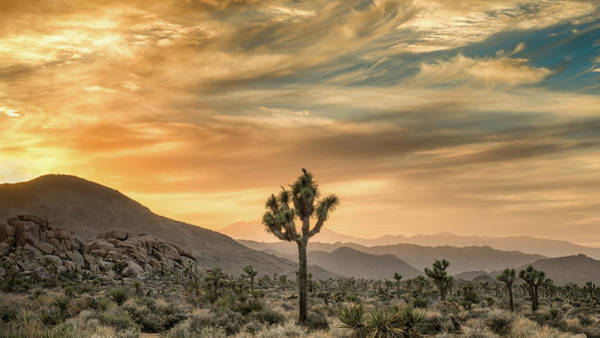 Mojave Photograph - Joshua Tree Sunrise by Joseph Smith