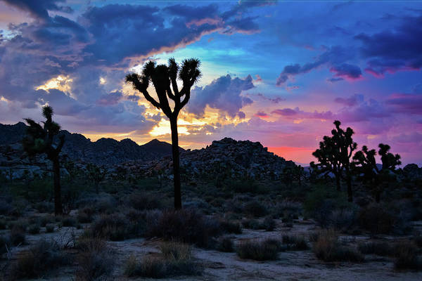 Photograph - Joshua Tree Sunset Colors by Kyle Hanson