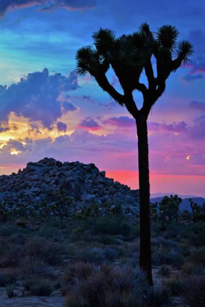 Photograph - Joshua Tree Sunset Sky Portrait by Kyle Hanson