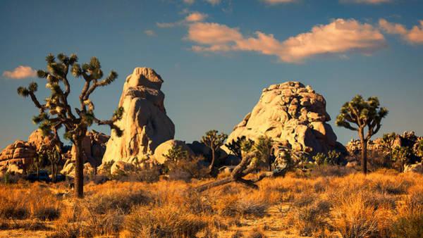 Wall Art - Photograph - Joshua Trees And Rocks - Sunset by Stephen Stookey