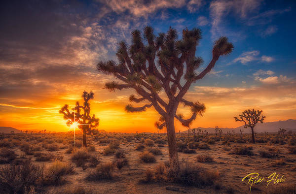 Photograph - Joshua Trees At Sunset by Rikk Flohr