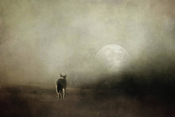 Photograph - Journey Into Moonlight by Jai Johnson
