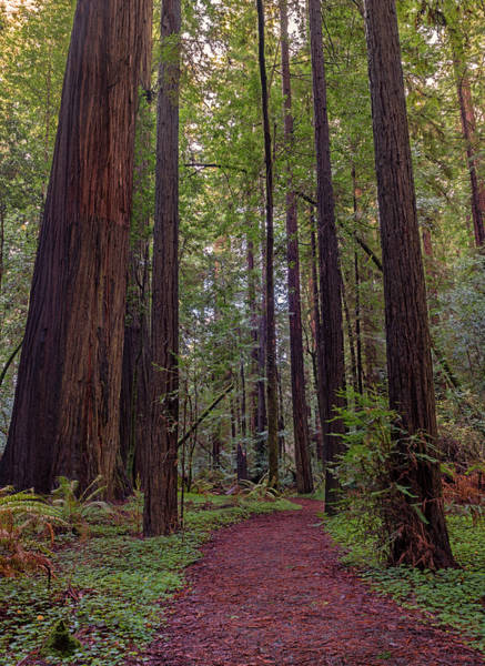 Photograph - Journey Into The Primordial Forest by Loree Johnson