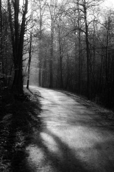 Photograph - Journey Through The Forest by Miguel Winterpacht