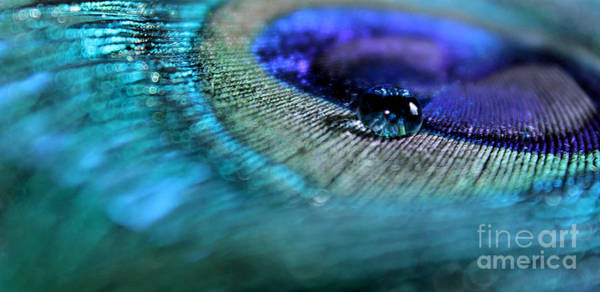 Peacock Photograph - Journey Within by Krissy Katsimbras