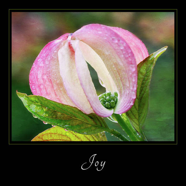 Photograph - Joy 3 by Mary Jo Allen