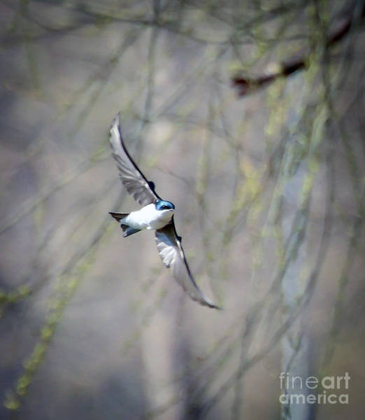 Radford Photograph - Joy In Flight by Kerri Farley