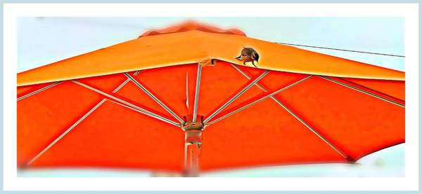 Free Dive Wall Art - Digital Art - Joy On An Umbrella by Mindy Newman