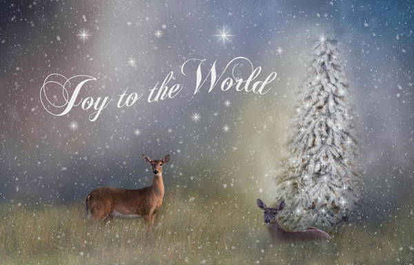 Photograph - Joy To The World by Kim Hojnacki