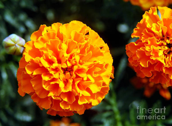 Photograph - Joyful Orange Floral Lace by Clayton Bruster