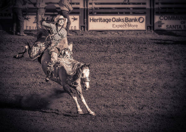 Pferd Photograph - Joyride by Caitlyn Grasso
