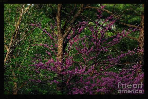 Photograph - Judas In The Forest by Frank J Casella