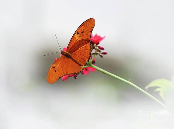 Photograph - Julia Butterfly Dream by Karen Adams