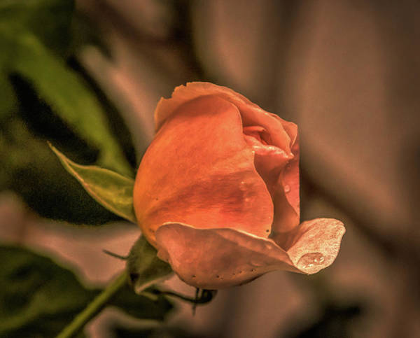 Photograph - July 26, 2015 by Leif Sohlman