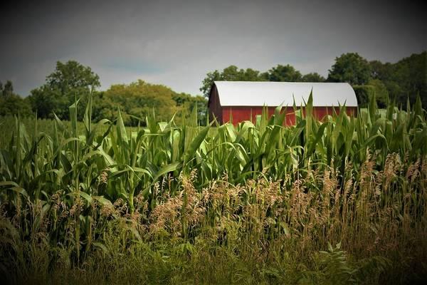 0020 - July Corn Art Print