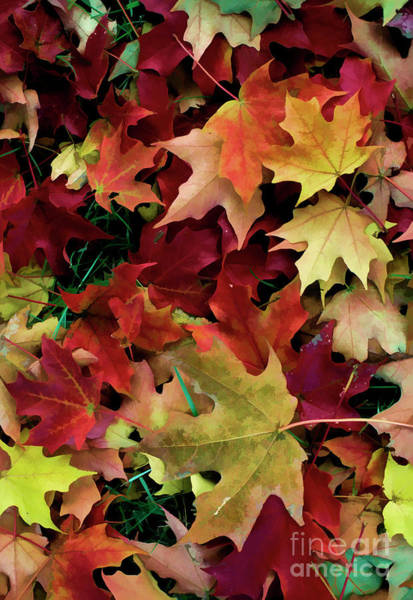 Digital Art - Jumble Of Autumn Leaves With Digital Effects by William Kuta