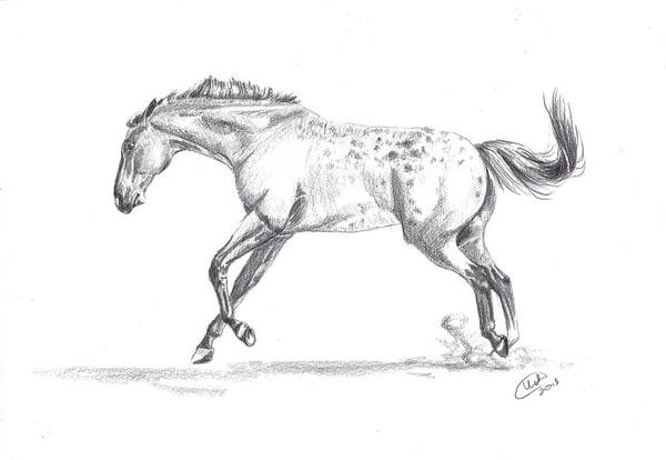 Appaloosa Drawing - Jumping Around by Kate Black