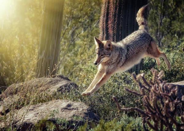 Photograph - Jumping Rocks by Elaine Malott