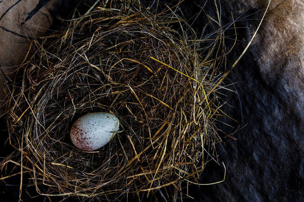 Wall Art - Photograph - Junco Bird Nest And Egg by Carol Leigh