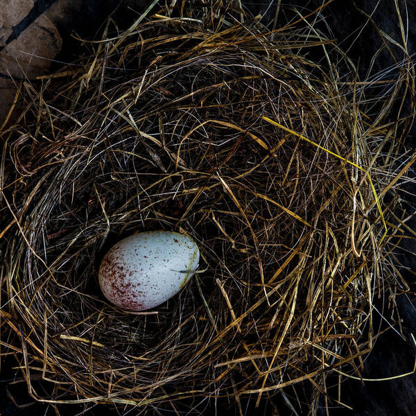 Wall Art - Photograph - Junco Bird Nest And Egg Square Version by Carol Leigh