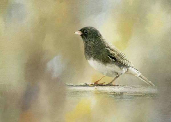 Bird Watcher Photograph - Junco by Cindi Ressler