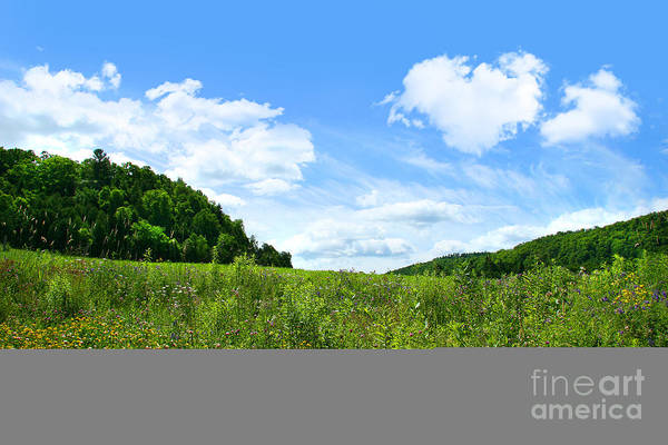 Wall Art - Photograph - June Flowers With Bright Summer Sky by Sandra Cunningham