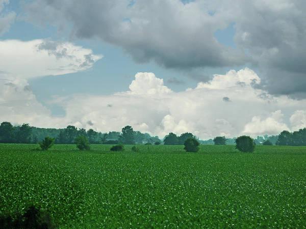 Cornfield Photograph - June's Emerald Fields by Garth Glazier