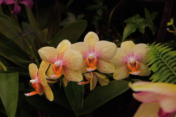 Photograph - Jungle Orchids by Byron Varvarigos