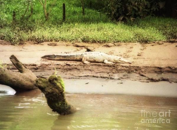 Photograph - Jungle River Costa Rica Camen by Ted Pollard