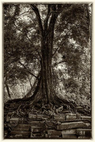 Wall Art - Photograph - Jungle Tree by Stephen Stookey
