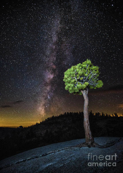 Photograph - Juniper And Stars by Anthony Michael Bonafede