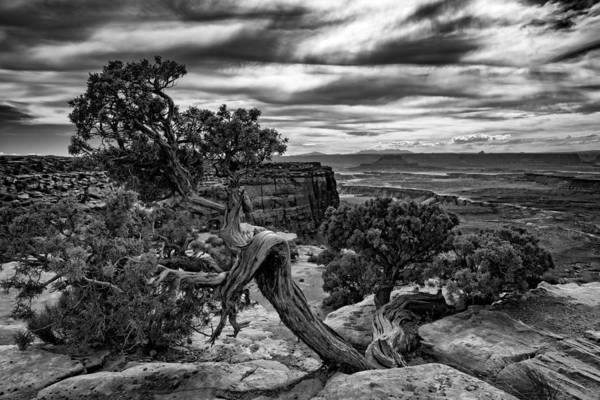 Berk Wall Art - Photograph - Juniper At Green River by Rick Berk