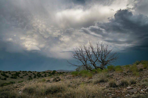 Photograph - Juniper Skeleton And Storm Clouds by Mary Lee Dereske