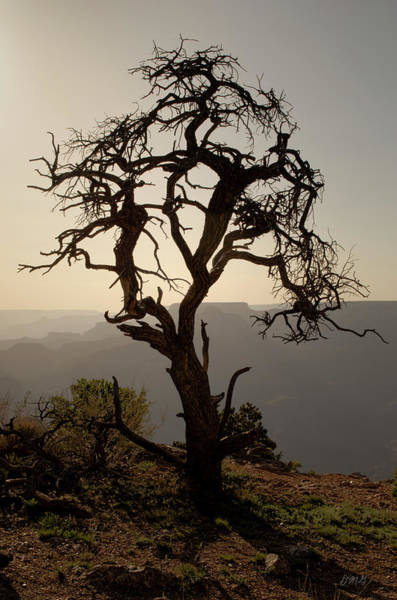 Photograph - Juniper Tree At Grand Canyon by David Gordon