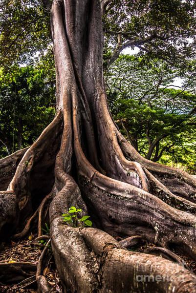 Jurassic Park Tree Roots Art Print