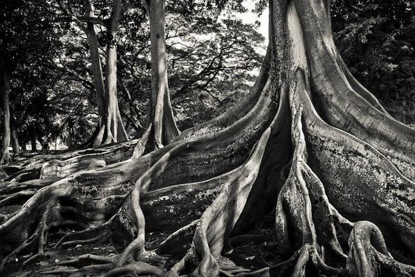 Allerton Garden Photograph - Jurassic Trees by Thorsten Scheuermann