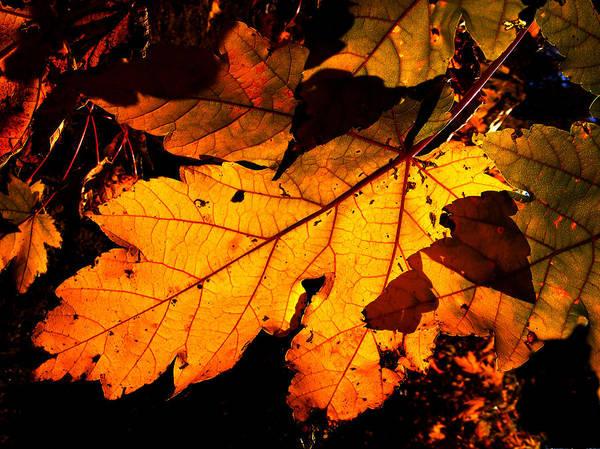 Christine Falls Photograph - Just A Leaf by Rachel Christine Nowicki